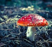 inedible hazardous to health mushrooms in the forest